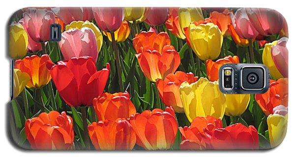 Tulips Like Sunlight Galaxy S5 Case