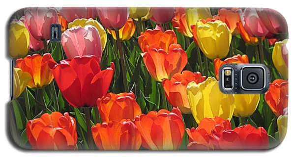 Tulips Like Sunlight Galaxy S5 Case