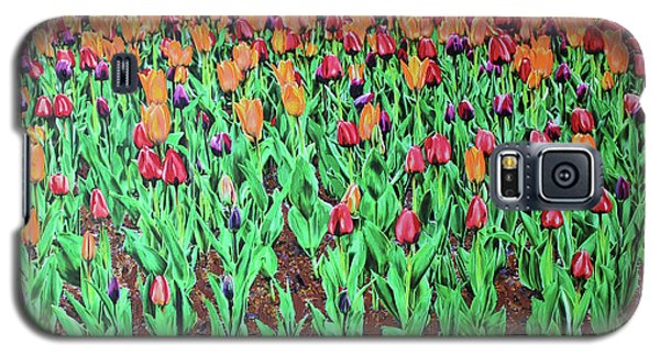 Tulips Tulips Everywhere Galaxy S5 Case