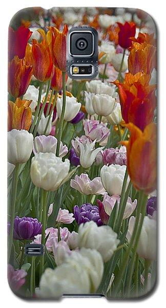 Tulips... Tulips... Everywhere Galaxy S5 Case by Deborah Klubertanz