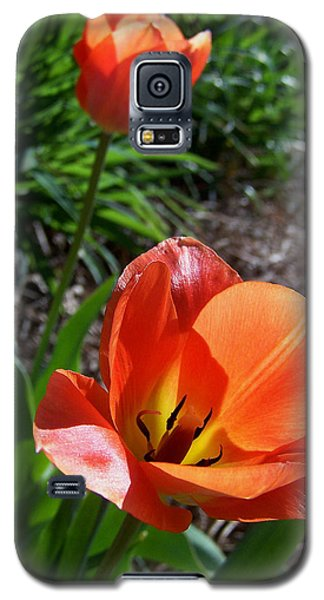 Galaxy S5 Case featuring the photograph Tulips Wearing Orange by Sandi OReilly