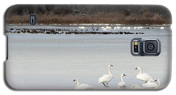 Tundra Swans 1 Galaxy S5 Case