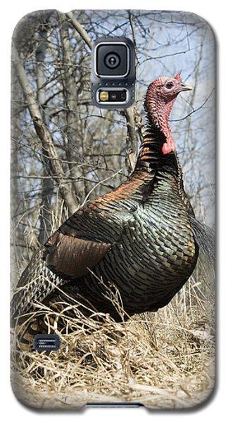 Turkey Tom Galaxy S5 Case