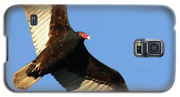 Turkey Vulture Galaxy S5 Case by Debbie Stahre