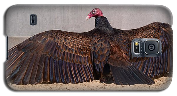 Turkey Vulture Spreading Wings Galaxy S5 Case