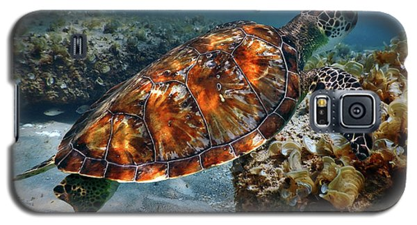Turtle And Shark Swimming At Ocean Reef Park On Singer Island Florida Galaxy S5 Case by Justin Kelefas