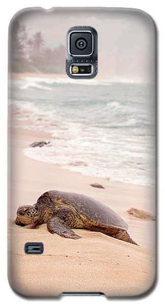 Turtle Beach Galaxy S5 Case by Heather Applegate