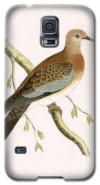 Turtle Dove Galaxy S5 Case by English School