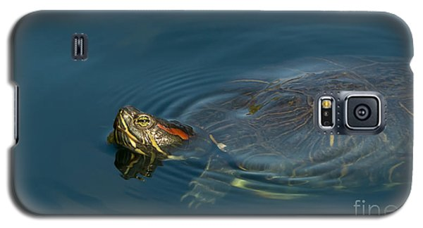Turtle Floating In Calm Waters Galaxy S5 Case