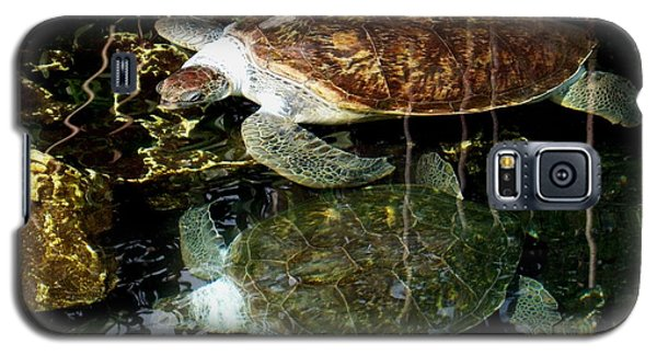 Turtles Galaxy S5 Case by Angela Murray