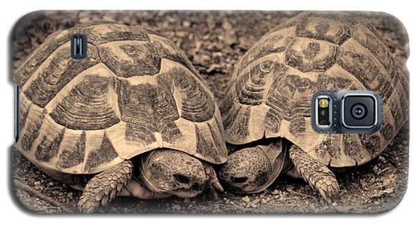 Galaxy S5 Case featuring the photograph Turtles Pair by Gina Dsgn