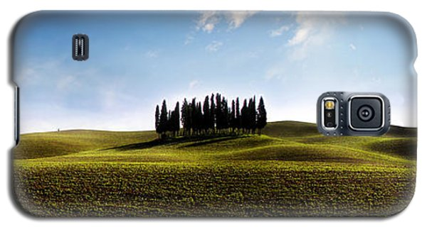 Tuscan Cypress Tree Galaxy S5 Case
