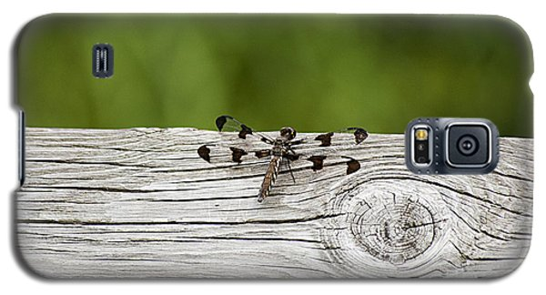 Twelve Spotted-skimmer 20120703_213a Galaxy S5 Case