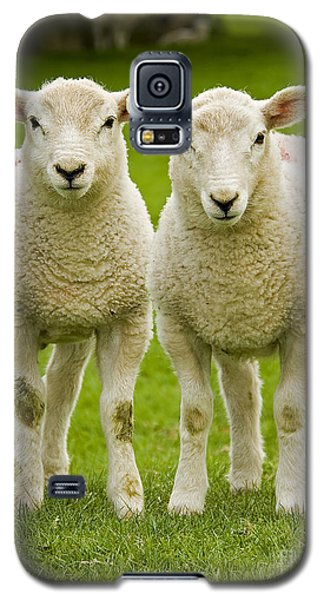 Twin Lambs Galaxy S5 Case