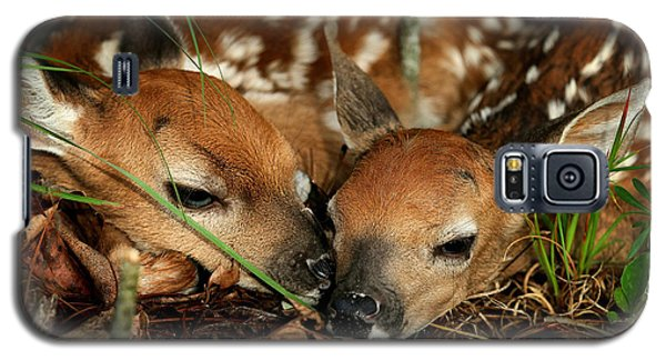 Twin Newborn Fawns Galaxy S5 Case