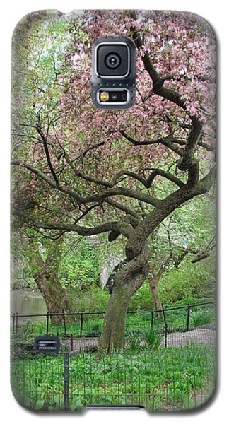 Twisted Cherry Tree In Central Park Galaxy S5 Case
