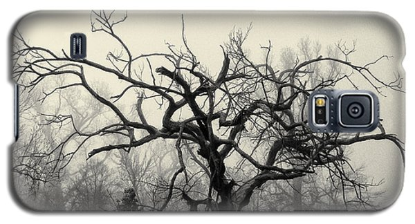 Twisted Tree In Fog Galaxy S5 Case