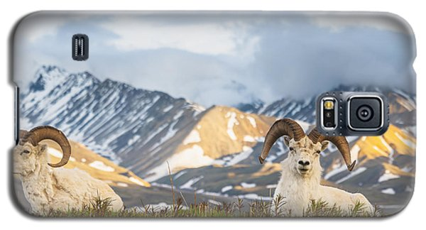 Two Adult Dall Sheep Rams Resting Galaxy S5 Case by Michael Jones