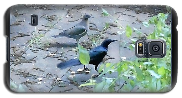 Galaxy S5 Case featuring the photograph Two Birds Blue by Felipe Adan Lerma