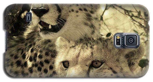 Two Cheetahs Galaxy S5 Case