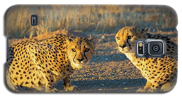 Two Cheetahs Galaxy S5 Case by Inge Johnsson