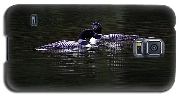 Two Common Loons At Sunset Galaxy S5 Case