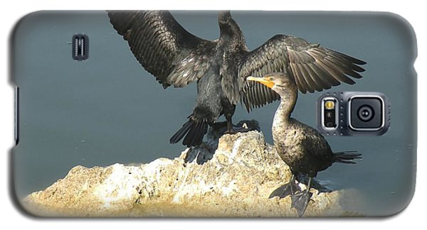 Galaxy S5 Case featuring the photograph Two Cormorants by Rosalie Scanlon