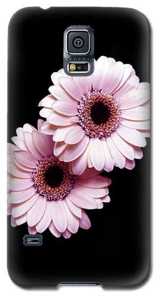 Two Gerberas On Black Galaxy S5 Case