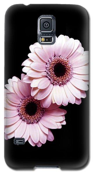 Two Gerberas On Black Galaxy S5 Case