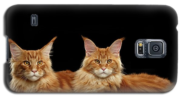 Two Ginger Maine Coon Cat On Black Galaxy S5 Case