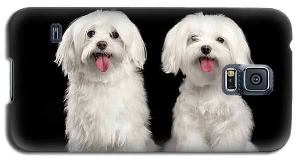 Dog Galaxy S5 Case - Two Happy White Maltese Dogs Sitting, Looking In Camera Isolated by Sergey Taran
