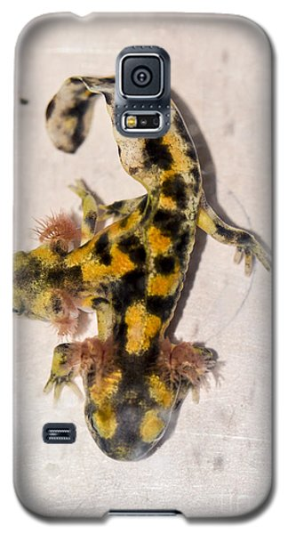 Two-headed Near Eastern Fire Salamande Galaxy S5 Case by Shay Levy