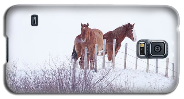 Two Horses In The Snow Galaxy S5 Case