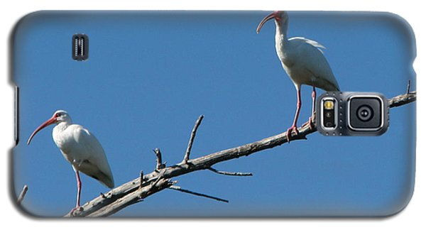 Two Ibis On Perch Galaxy S5 Case