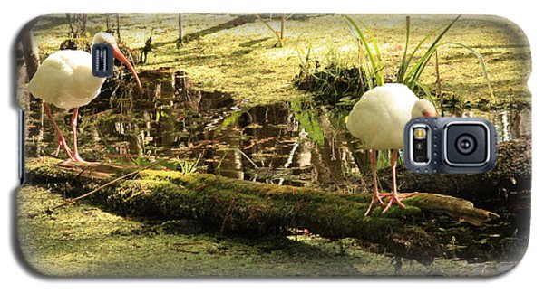 Two Ibises On A Log Galaxy S5 Case by Carol Groenen