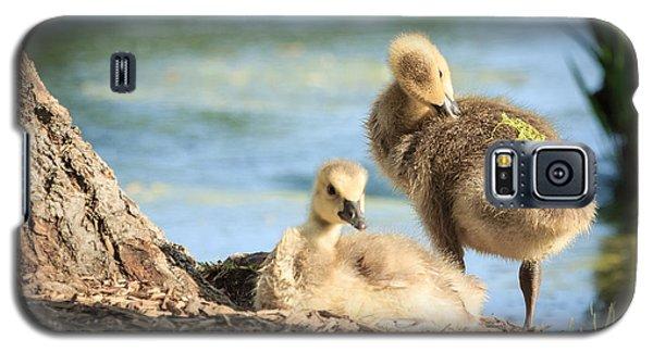 Two Little Goslings Galaxy S5 Case