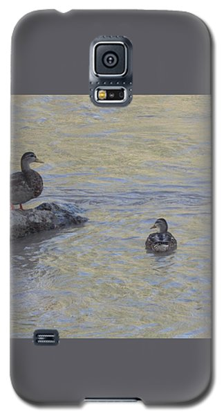 Two Mallard Ducks Galaxy S5 Case