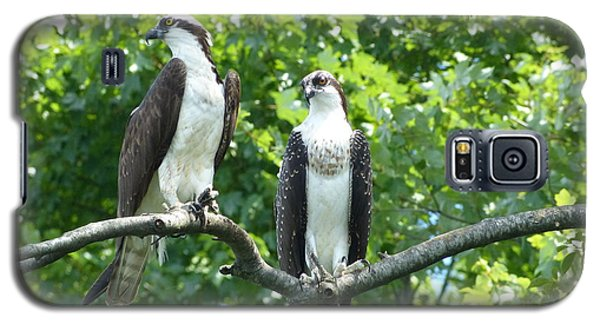 Galaxy S5 Case featuring the photograph Two On A Limb - Osprey by Donald C Morgan