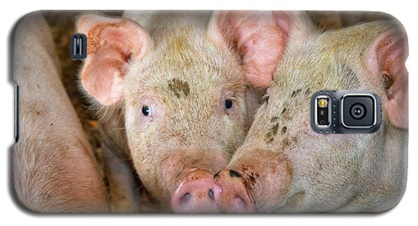 Two Pigs Galaxy S5 Case