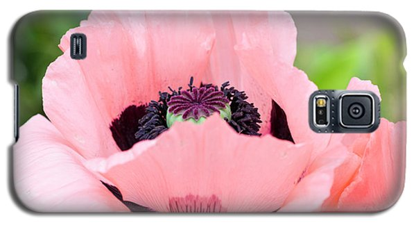 Two Pink Poppies Galaxy S5 Case