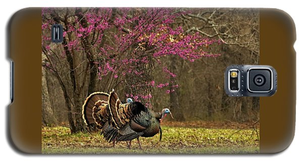 Two Tom Turkey And Redbud Tree Galaxy S5 Case