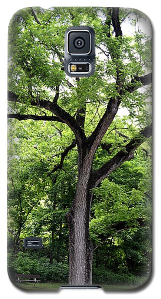 Two Tone Tree Galaxy S5 Case