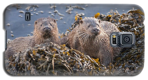 Two Young European Otters Galaxy S5 Case