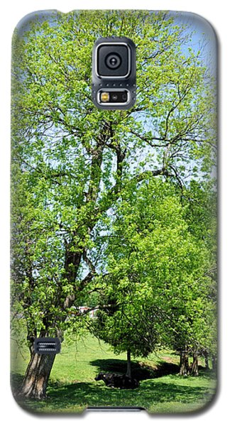 Under The Oak Galaxy S5 Case by Jan Amiss Photography