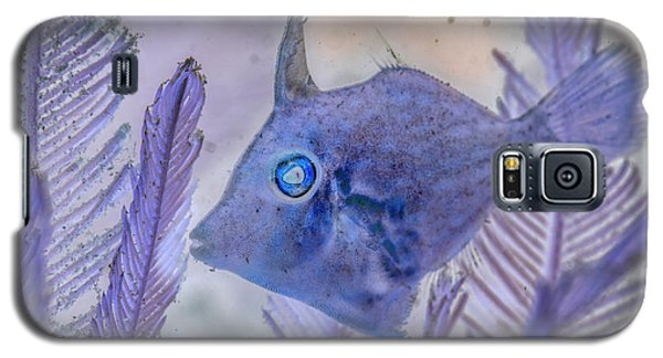 Galaxy S5 Case featuring the photograph Under The Sea Colorful Watercolor Art #8 by Debra and Dave Vanderlaan