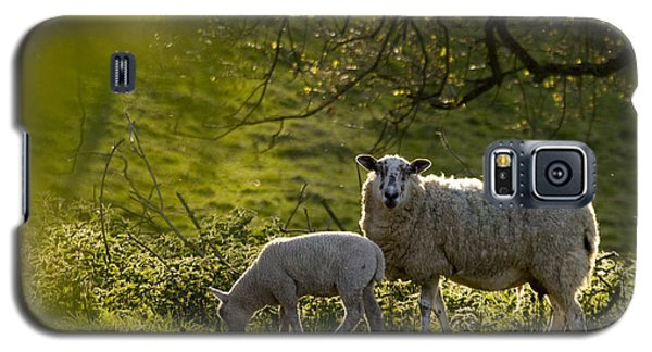 Sheep Galaxy S5 Case - Under The Setting Sun by Angel Ciesniarska