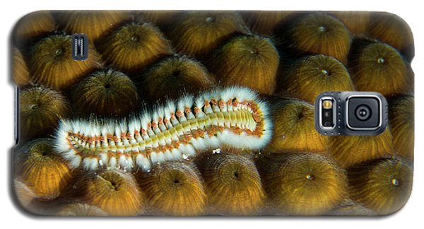 Galaxy S5 Case featuring the photograph Undulating Bristle Worm by Jean Noren