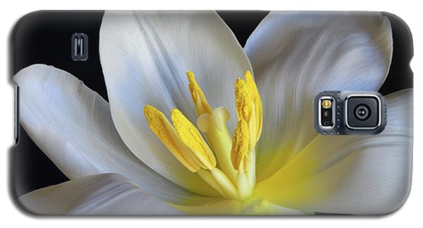 Galaxy S5 Case featuring the photograph Unfolding Tulip. by Terence Davis