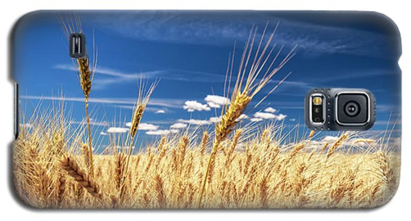 Unruly Beauty Galaxy S5 Case