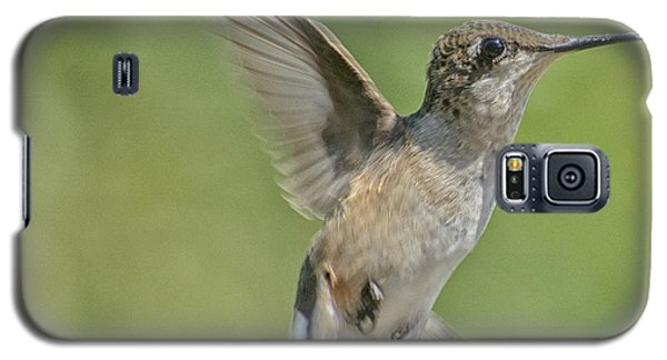 Untitled Hum_bird_four Galaxy S5 Case